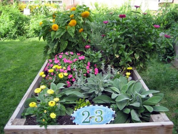 2nd/3rd grade combined classroom garden at Western Hills Magnet Center