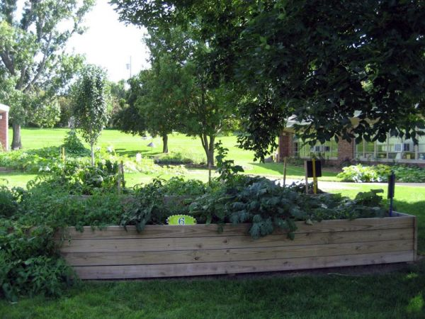 6th-graders' vegetable garden at Western Hills Magnet Center