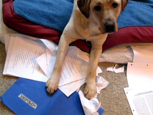 Want a puppy? Do your homework!