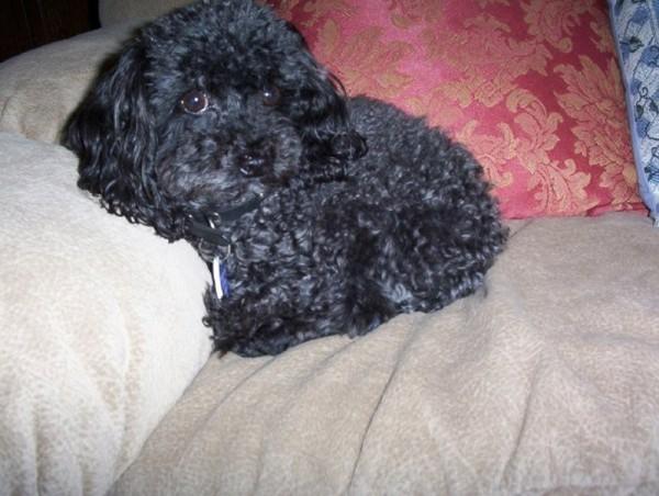 Ernie Dog