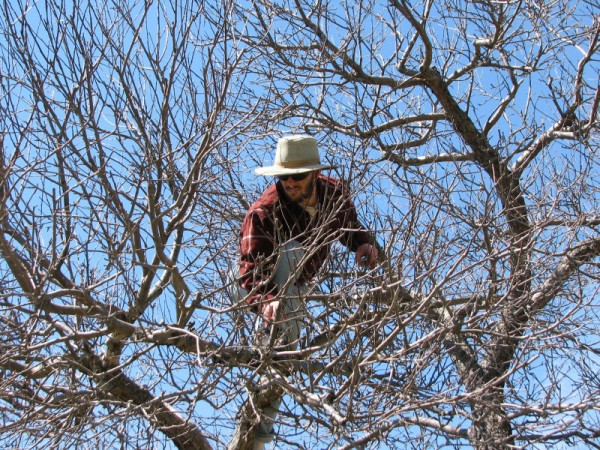 A Husband's Obsession with Pruning