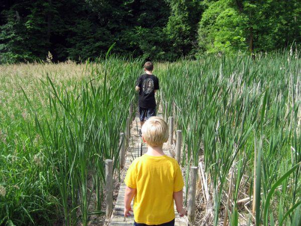 Fontenelle Forest Boardwalk