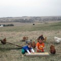 Hens out on pasture enjoying early Spring weather.