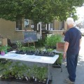 A wide variety of starter plants were available at the market this spring from several vendors!