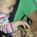 My youngest daughter, Annie, petting a chick at a friend's house. She already shows an affinity for animals.