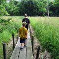 Fontenelle Forest Wetlands
