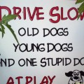 Drive Slow - Old Dogs, Young Dogs, and one Stupid Dog