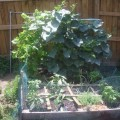Square Foot Gardening