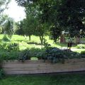 6th-graders' vegetable garden at Western Hills Magnet Center