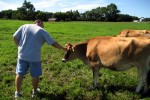 Chad Pooschke greets a dairy cow on Kvam Family Farm