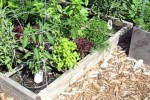 Square Foot Garden Tour