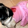 LuckyPugs's picture
