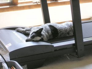 The proper use of a treadmill