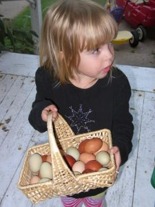 Etta, so proud of our first week of egg collection