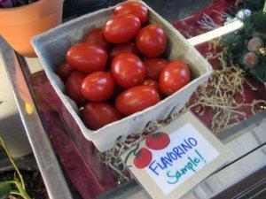 Garden Fresh Tomatos