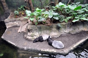 Lied Jungle at Henry Doorly Zoo