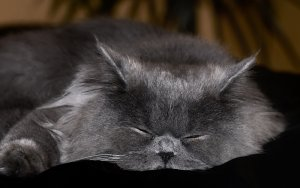 NHS Cat
