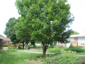 Outdoor classroom/garden at Western Hills Magnet Center