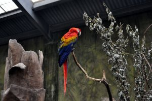 Parrot at the Henry Doorly Zoo