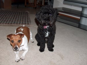 Cruizer and Ebi, my parents dogs